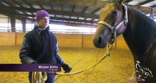 Lunging Your Horse – Mirjam Stillo