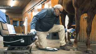 Safety & Welfare of horses, from US Equestrian (USEF)