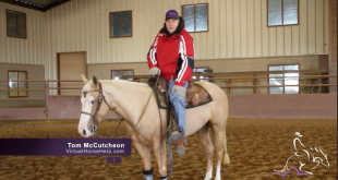Keeping Your Horse Warm During the Winter – Tom McCutcheon